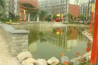 明珠佳苑 小区中心花园