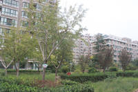 荣域铂庭  小区绿色植被
