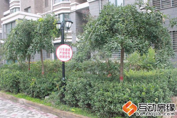 荣域铂庭  小区绿色树木