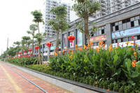 四季康城 绿化实景照