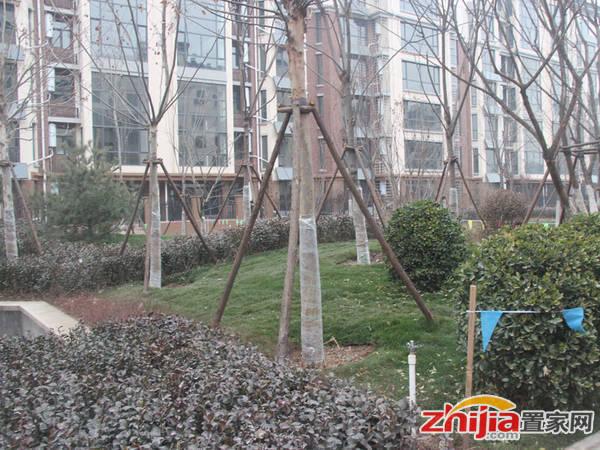 赵都新城·缇香花舍 小区园林