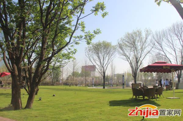 阳光东尚 园林实景之草地