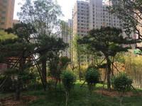 盛紫·中央公园 实景图
