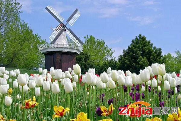 9月26-10月7日荷兰风车大型主题展空降美的城