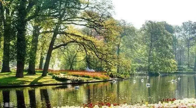 水木相生·花鸟与荣丨恒大绿洲匠造城市桃源居境