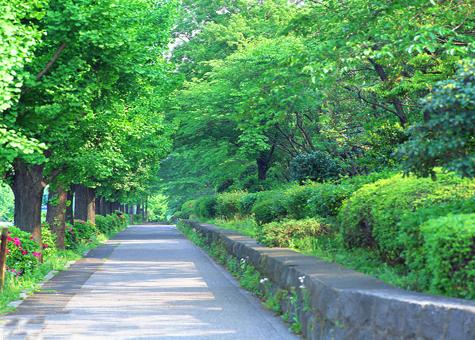 衡水:整治市区环境 扮靓生态湖城