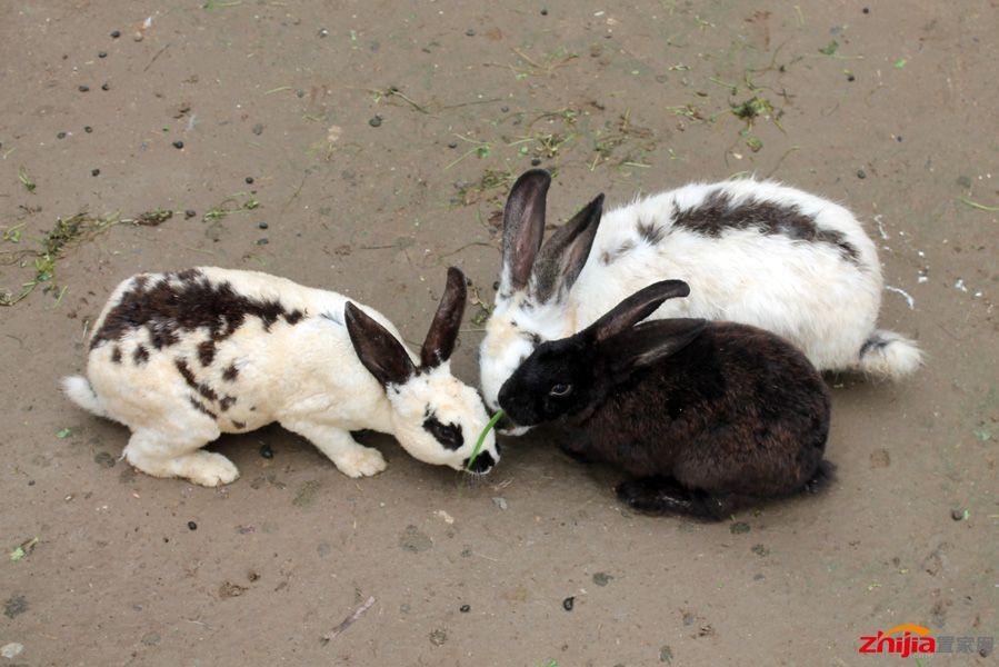 儿童农场可爱的小兔子