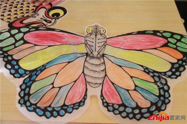 彩绘蝴蝶画法 步骤