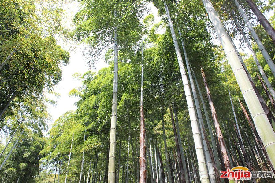 杭州竹海风景区