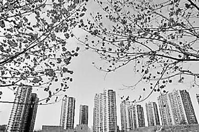 石家庄栾城区为何频频迎来各大房企进驻?