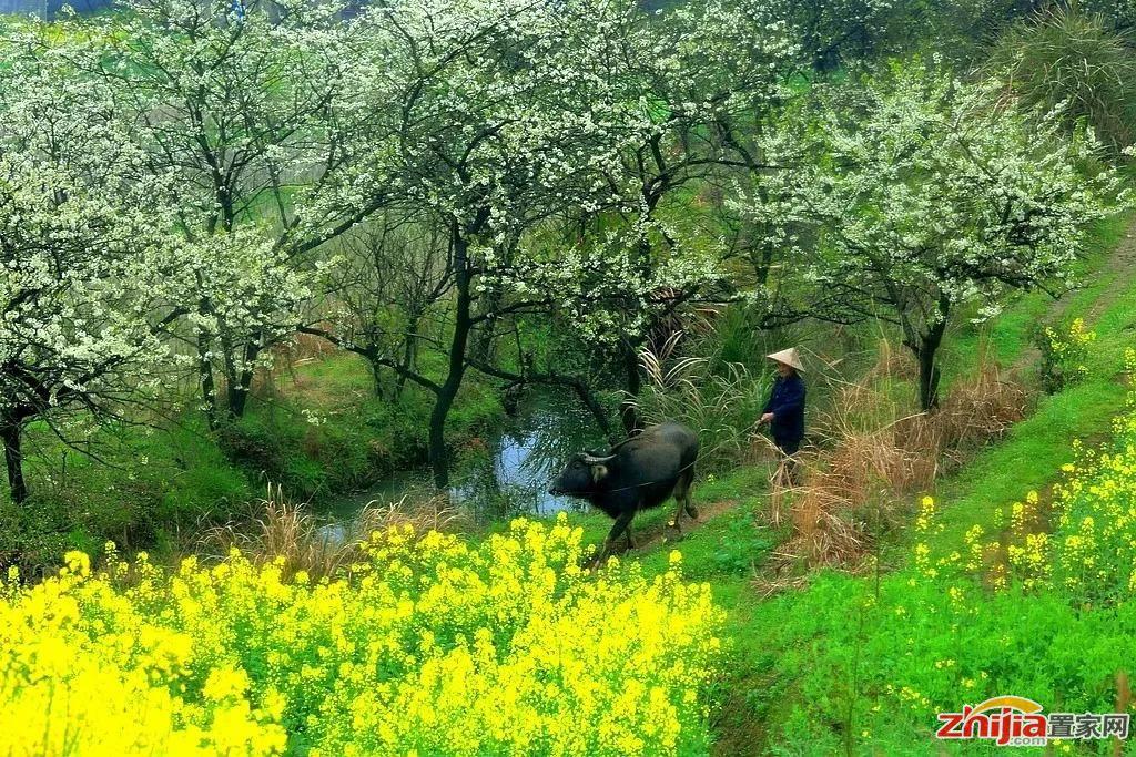 我想和你去江南,共赴一场春天的约会!
