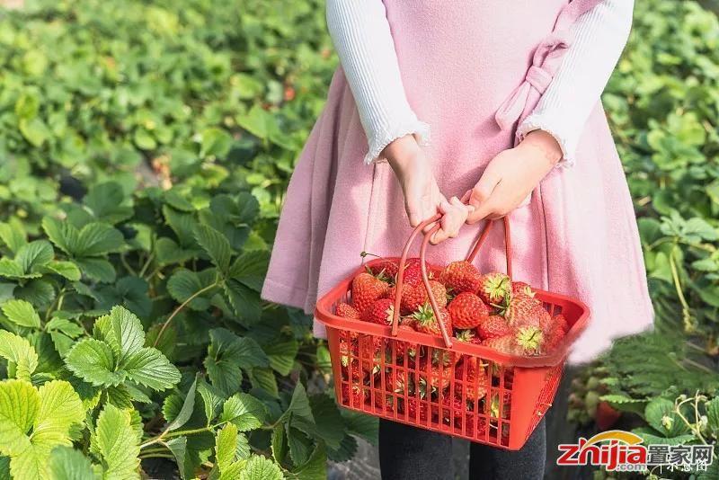 2018融创石家庄首届春季采摘欢乐启幕,演绎你的邻里故事