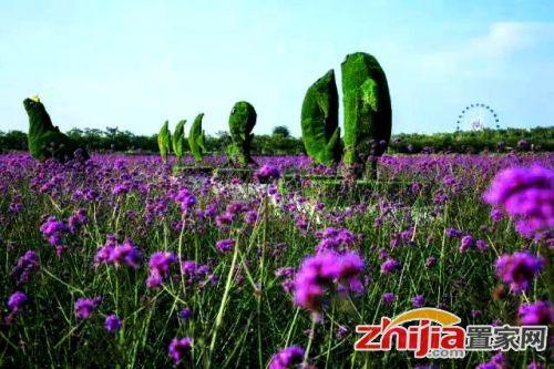 兰陵国家农业公园万亩花海倾情绽放 感受清凉一夏
