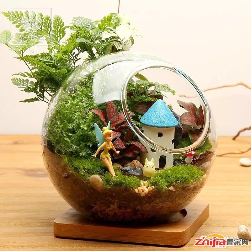 把绿色带回家—高远·旭东城微景观DIY周末上演