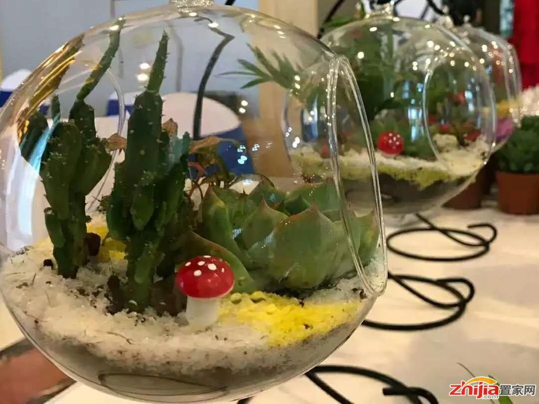 铂宫绿色时光 微景观绿植DIY,清新夏日!