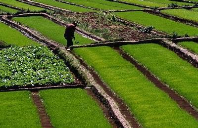 河北邱县流转农村土地13万亩 2.6万人就地转移